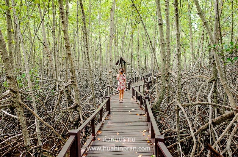 เที่ยวปราณบุรี วนอุทยานปราณ