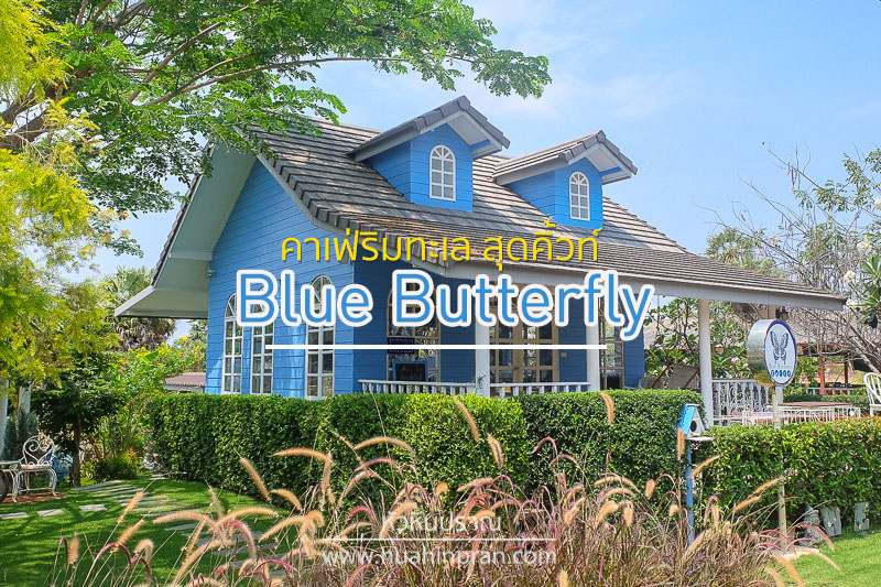 Blue Butterfly Cover